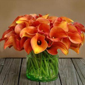 cantedeskia - kalie - pomarańczowe kwiaty