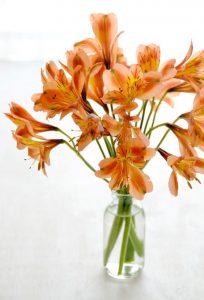Alstromerie - pomarańczowe kwiaty