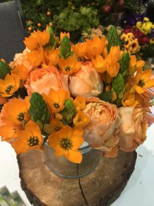 sniedek Ornithogalum dubium - pomarańczowe kwiaty