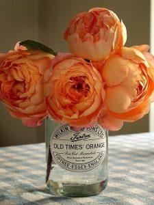 Piwonie - pomarańczowe kwiaty