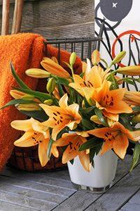 lilie - pomarańczowe kwiaty