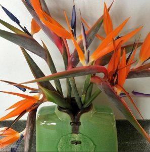 Strelicje - pomarańczowe kwiaty