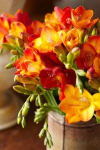 Frezje - pomarańczowe kwiaty