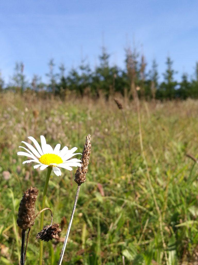 kwiaty na Mazurach