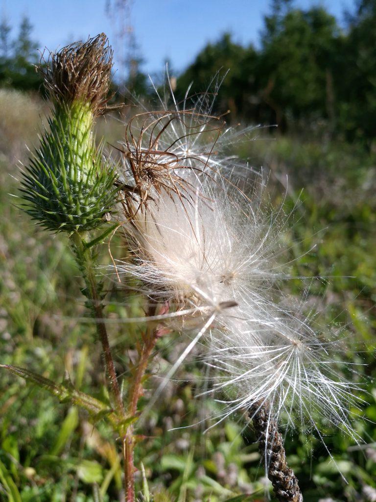 rośliny na Mazurach